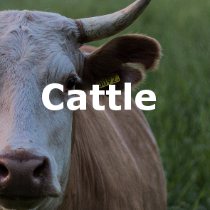 cattle_button